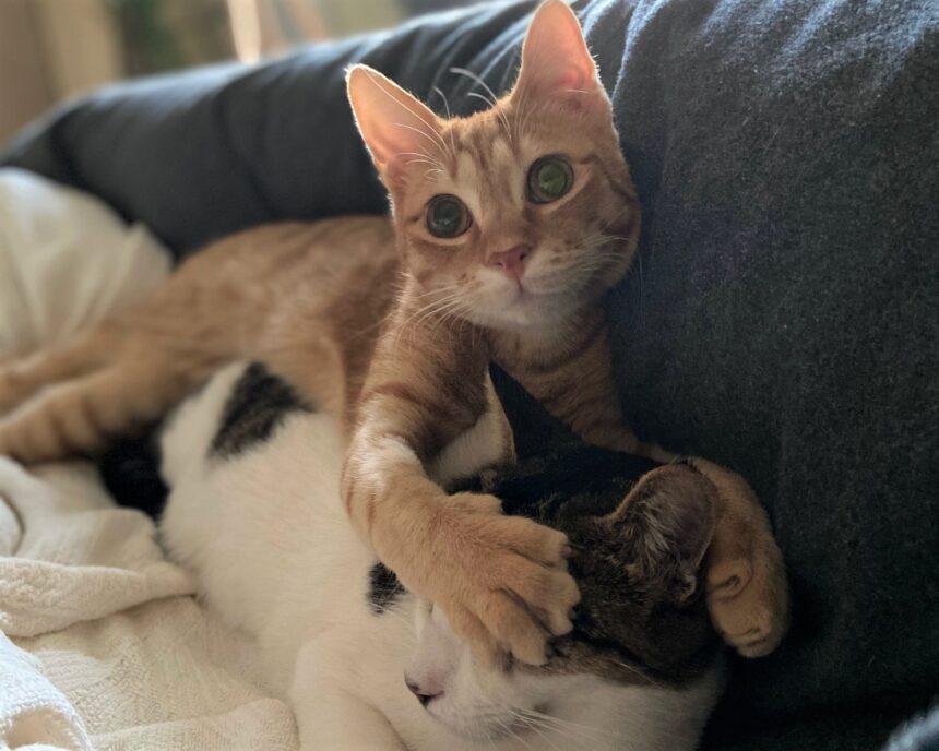 Koty, część 2