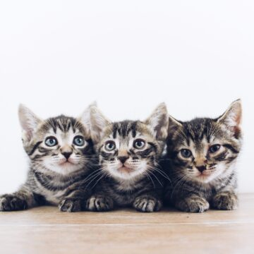 Koty, część 3